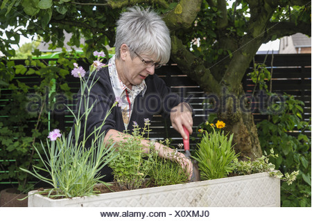 Teacher uses fresh plants in a flower box - Stock Photo