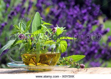 fresh herbal tea from the garden - Stock Photo