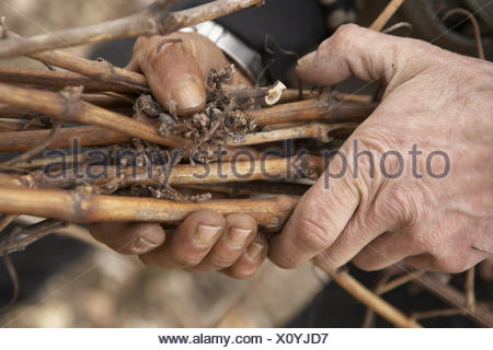 Man, hands, detail, branches, hold, - Stock Photo