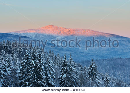 Conifer Forest at Dawn, Winter, Grafenau, Rachel, National Park Bavarian Forest, Bavaria, Germany - Stock Photo