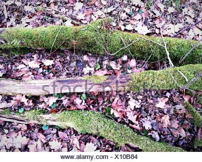 High Angle View Of Moss Covered Tree Roots In Forest - Stock Photo