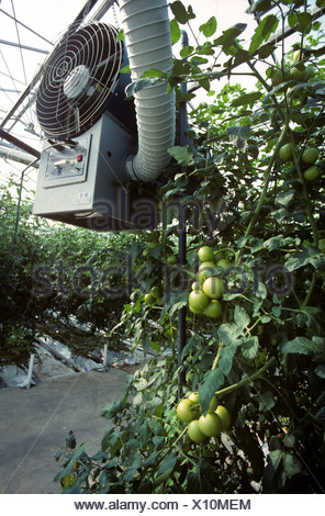 Heater fan ducting in large commercial tomato glasshouse - Stock Photo
