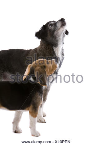 Two dogs looking up - Stock Photo