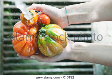 Italy, Tuscany, Magliano, Close up of woman's hand washing tomatoes under water - Stock Photo