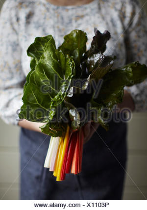Cropped view of woman holding rainbow chard - Stock Photo