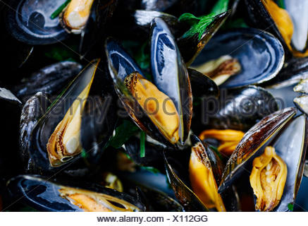 Close up shot of cooked blue mussels - Stock Photo