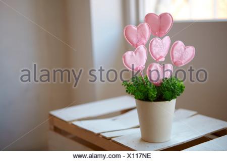 Lollipop In A Flower Pot - Stock Photo