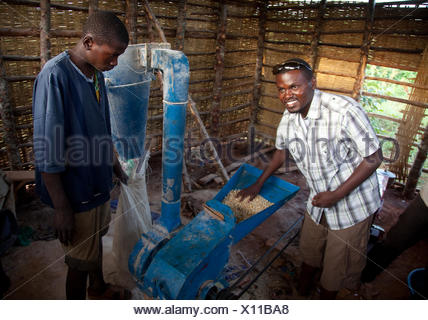 two men producing maize in their own mill meal for the local market, Burundi, Cankuzo, Near National Parc de la Ruvubu, Cankuzo - Stock Photo