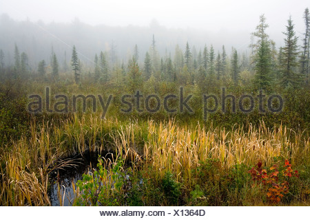 Morning fog in Algonquin Park in fall, Ontario, Canada - Stock Photo