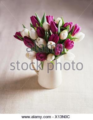 White and purple tulip flower arrangement in jug - Stock Photo