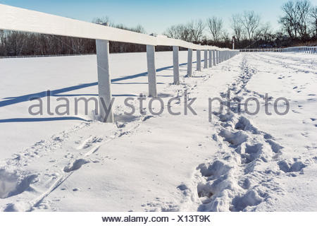 Footprints in the snow along wooden fence - Stock Photo