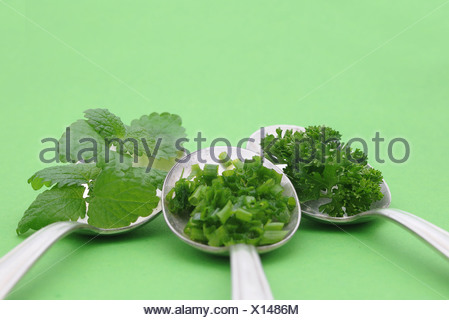 Fresh herbs, parsley, chives, mint, on old spoons - Stock Photo
