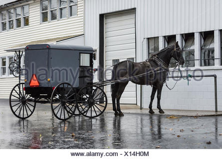 Amish horse and buggy, Lancaster County, Pennsylvania, USA - Stock Photo