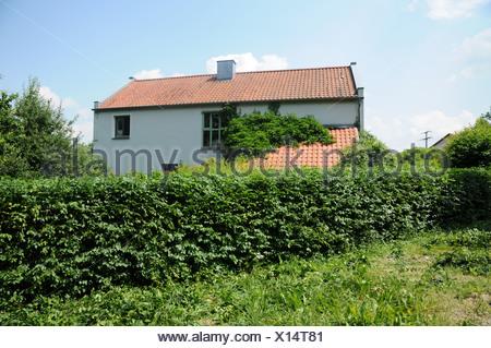 Shaped Hornbeam-Hedge - Stock Photo