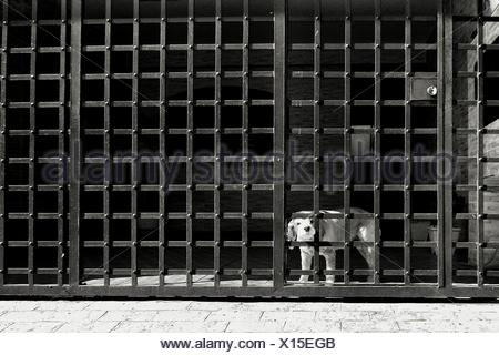 Portrait Of Dog In Cage - Stock Photo