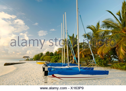 Hobby Car, catamarans, sail boats, side by side, on the beach, palm trees, Maldive island, South Male Atoll, Maldives, Achipela - Stock Photo