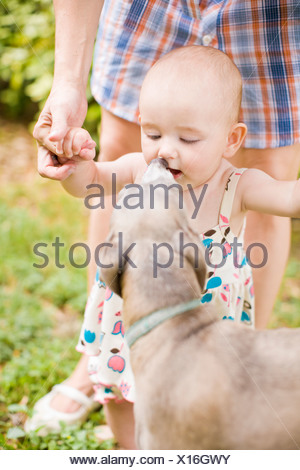 Dog licking baby girl?s face - Stock Photo