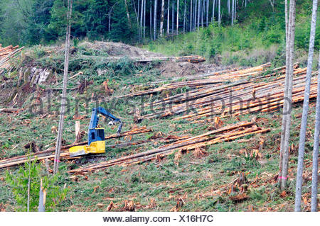 A logging show has trees fallen and stacked in preparation for transport to a sawmill near Beaver Cove, BC. - Stock Photo