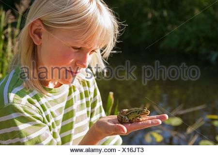 European edible frog, common edible frog (Rana kl. esculenta, Rana esculenta, Pelophylax esculentus), boy holding an edible frog in his hand, Germany - Stock Photo