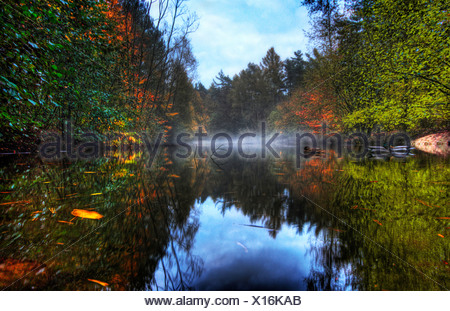 Ducks reflected in a mirror smooth misty pond with autumnal trees and bushes either side - Stock Photo