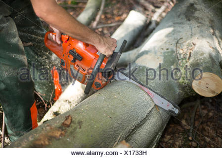 lumberjack with hardhat sawing wood in forest - Stock Photo