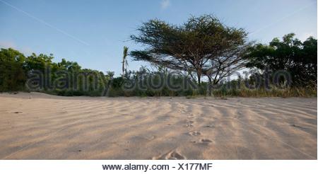 Beach At Manda Bay, Kenya, Africa - Stock Photo