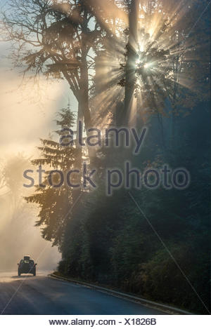 Driving in fog. Stanley Park Drive, Vancouver, British Columbia, Canada - Stock Photo