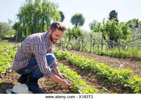 Young man crouched in field tending to tomato plants - Stock Photo