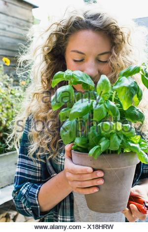 Young woman holding fresh basil in pot - Stock Photo