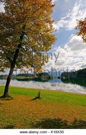 View across the Forggensee lake towards the Thannheim mountains, Bavarian Swabia, Bavaria, Germany Europe - Stock Photo