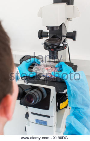 Cultures of cells in liquid medium, Biology and Research Center. - Stock Photo