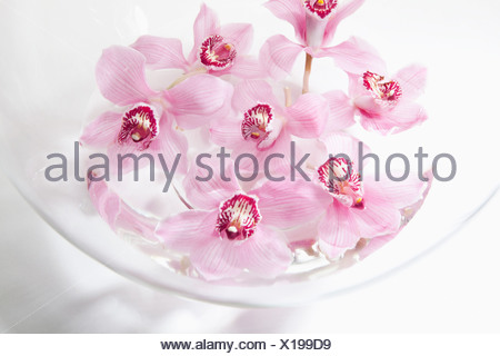 Pink flowers in glass bowl - Stock Photo