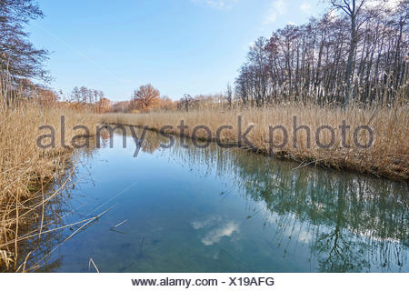 little river with reed belt in a swamp in winter, Germany, Bavaria, Oberpfalz - Stock Photo