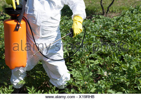 Man spraying toxic pesticides or insecticides in vegetable garden - Stock Photo