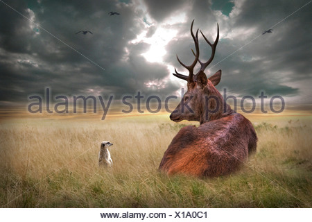 Stag lying down on wide plains with stormy skies - Stock Photo
