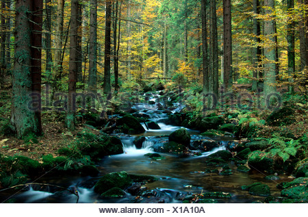 Mountain stream 'Kleine Ohr' in autumn, National Park Bavarian Forest, Bayerischer Wald, Lower Bavaria, Bavaria, Germany, Europe - Stock Photo