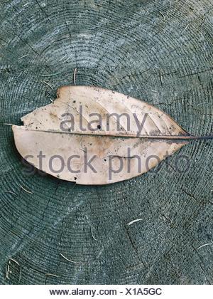 Close-Up Of Dry Leaf On Tree Stump - Stock Photo