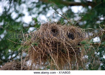 Cylindrical bird's nest Stock Photo