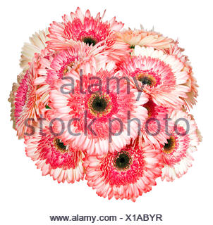 Pink Gerbera flower isolated on white - Stock Photo