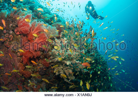 Diver and coral reef. - Stock Photo