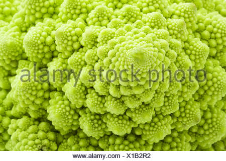 Green Romanesco broccoli isolated on white background - Stock Photo