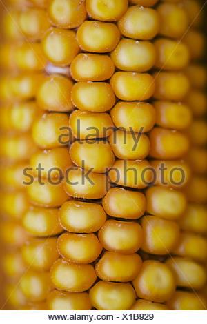 Corn close up - Stock Photo