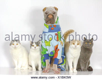 Portrait of dog and cats sitting together - Stock Photo