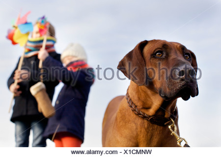 Gazing dog with boy and girl and paper windmills at coast - Stock Photo
