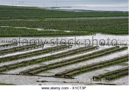 Oyster beds in the Bay of Morlaix, Finistere, Brittany, France, Europe - Stock Photo