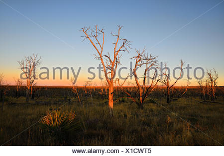 USA, Colorado, Mesa Verde National Park, Bare trees against sunset sky - Stock Photo