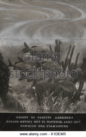 A photograph of a school of yellow grunts and coral. - Stock Photo