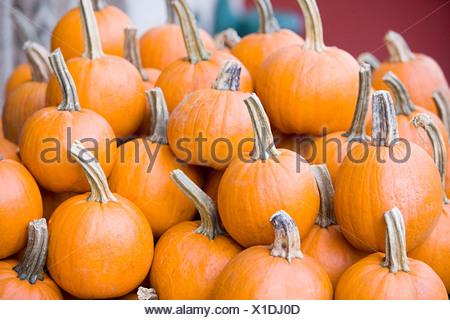 Stack of pumpkins - Stock Photo