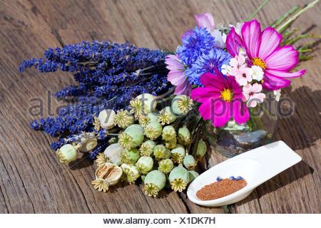 Sommerernte von Lavendelblüten, Sommerblumen, Mohnkapseln und Mohnsamen in einer kleinen Porzellanschale auf einem rustikalem Holztisch - Stock Photo
