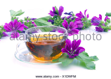 tee malve - tea malva 08 - Stock Photo